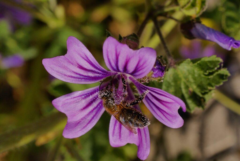 Pollen mézzel a prosztatitisből